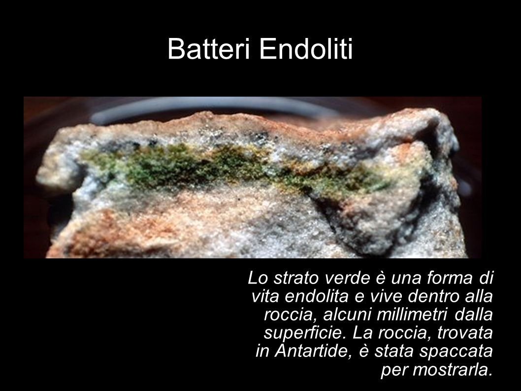 Batteri Endoliti