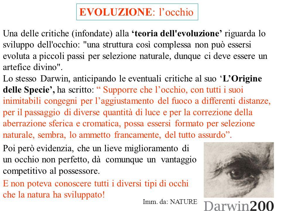 EVOLUZIONE: l'occhio