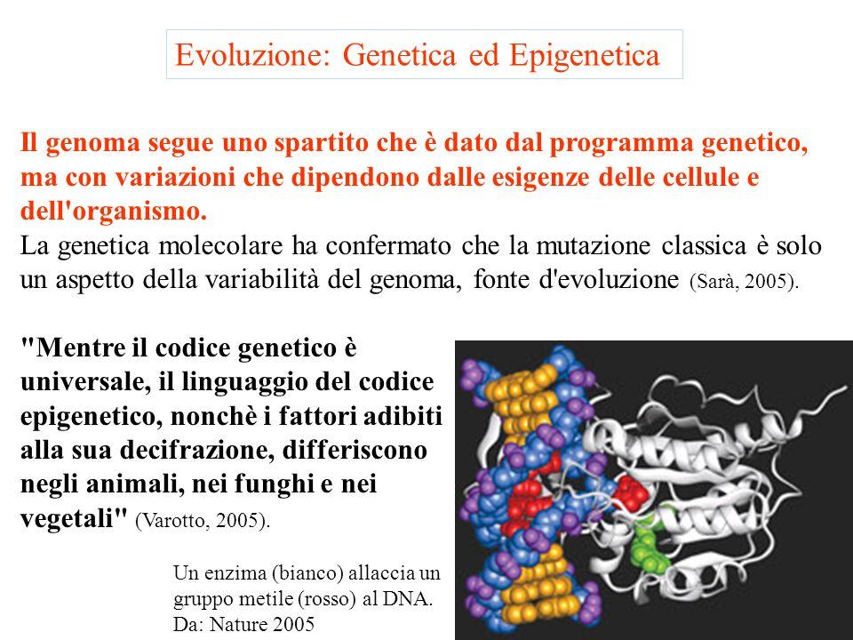 Evoluzione: Genetica ed Epigenetica