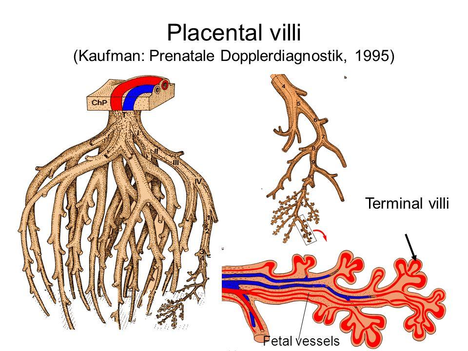 Placental villi (Kaufman: Prenatale Dopplerdiagnostik, 1995)