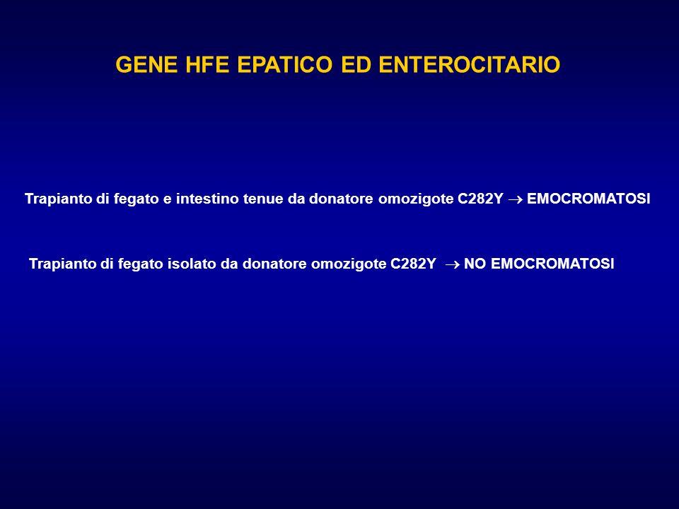 GENE HFE EPATICO ED ENTEROCITARIO