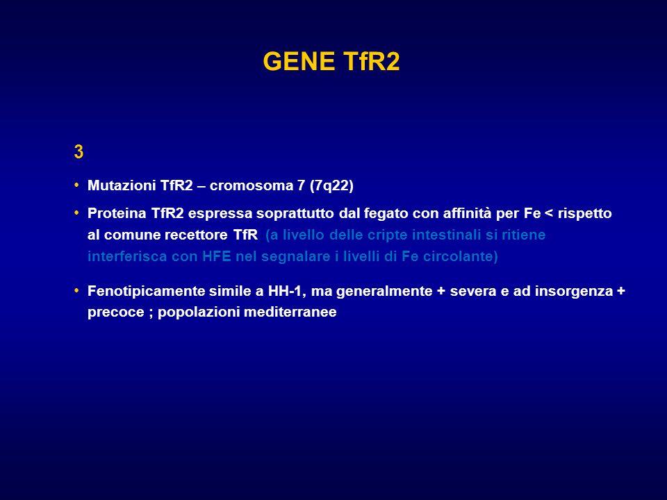 GENE TfR2 3 Mutazioni TfR2 – cromosoma 7 (7q22)