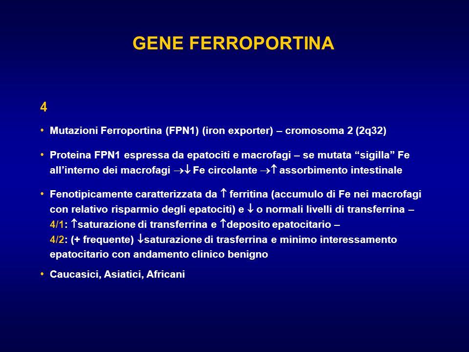 GENE FERROPORTINA 4. Mutazioni Ferroportina (FPN1) (iron exporter) – cromosoma 2 (2q32)