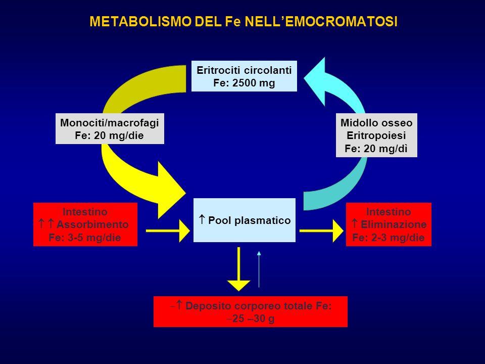 METABOLISMO DEL Fe NELL'EMOCROMATOSI