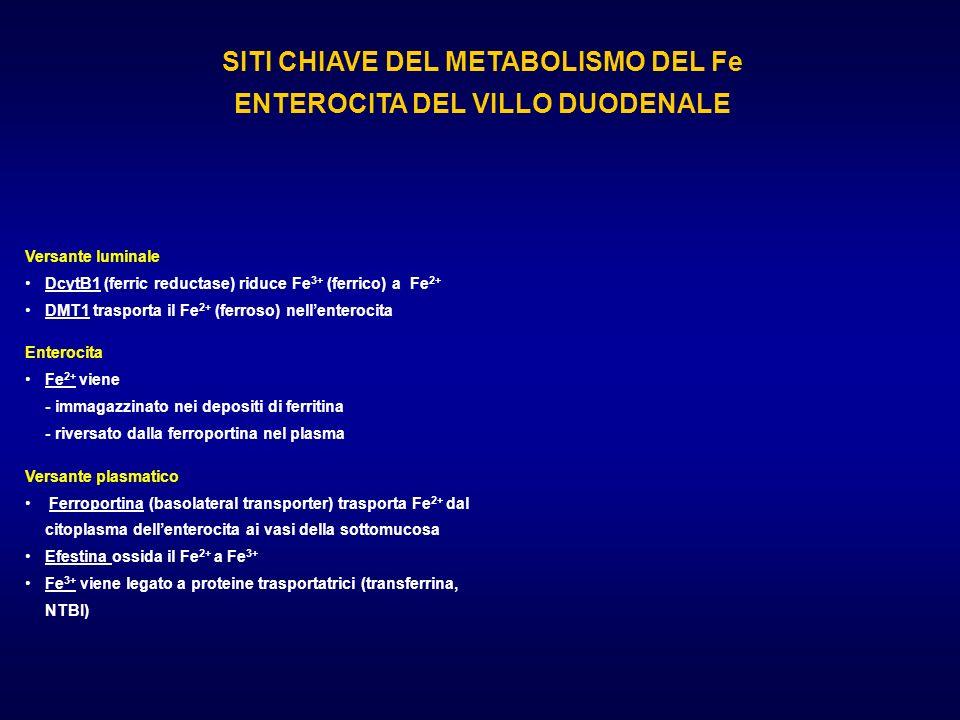 SITI CHIAVE DEL METABOLISMO DEL Fe ENTEROCITA DEL VILLO DUODENALE