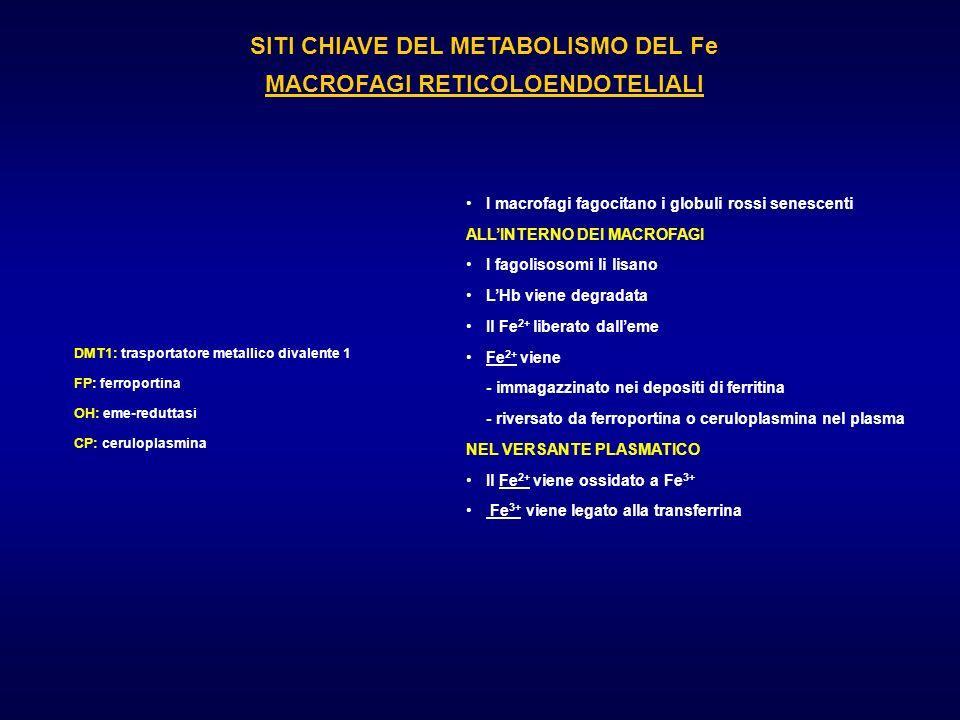 SITI CHIAVE DEL METABOLISMO DEL Fe MACROFAGI RETICOLOENDOTELIALI