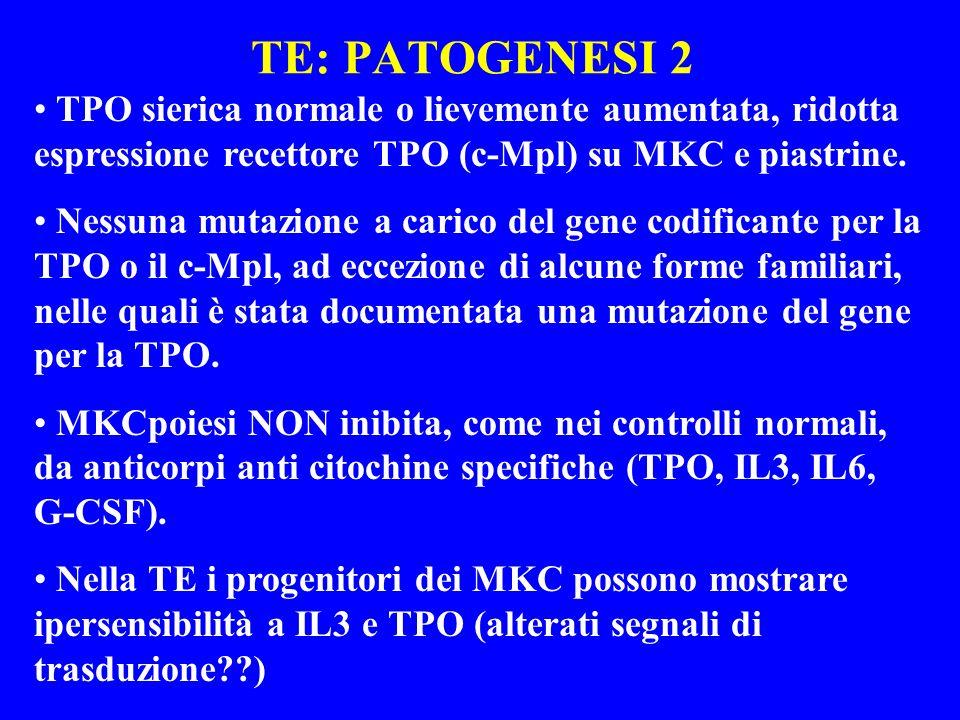 TE: PATOGENESI 2TPO sierica normale o lievemente aumentata, ridotta espressione recettore TPO (c-Mpl) su MKC e piastrine.