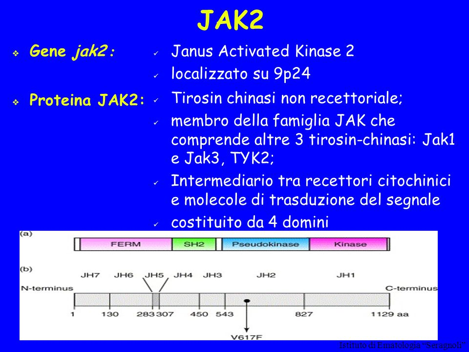 JAK2 Gene jak2 : Janus Activated Kinase 2 localizzato su 9p24