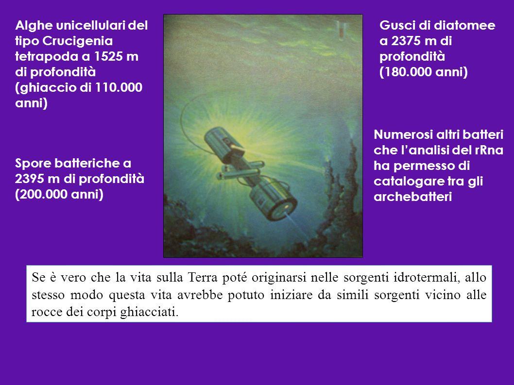 Alghe unicellulari del tipo Crucigenia tetrapoda a 1525 m di profondità (ghiaccio di 110.000 anni)