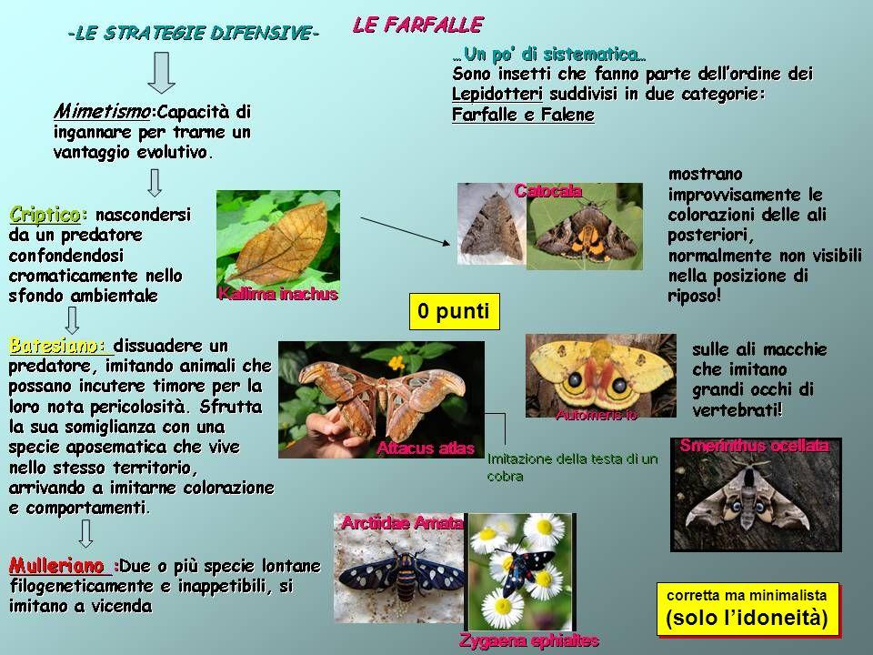 Tipologia di scheda zoologica