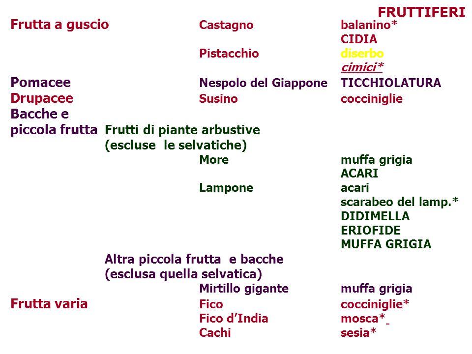 FRUTTIFERI Frutta a guscio Castagno balanino*
