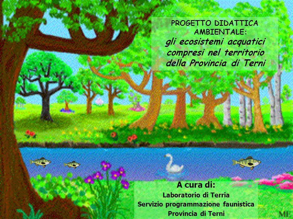 gli ecosistemi acquatici compresi nel territorio