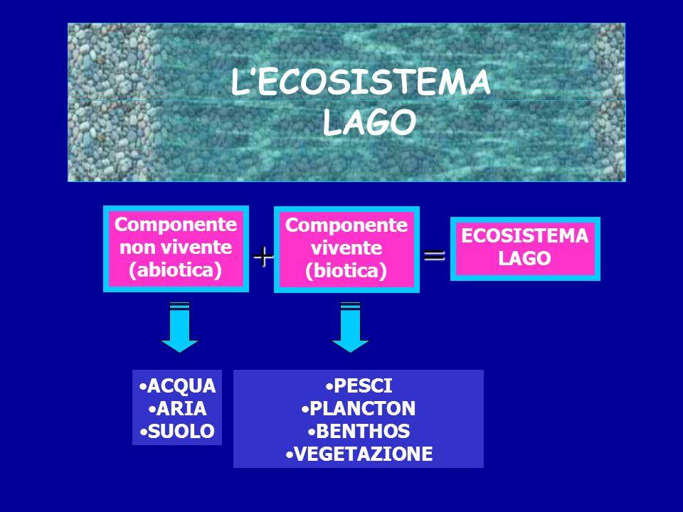 + = L'ECOSISTEMA LAGO Componente non vivente (abiotica) ACQUA ARIA