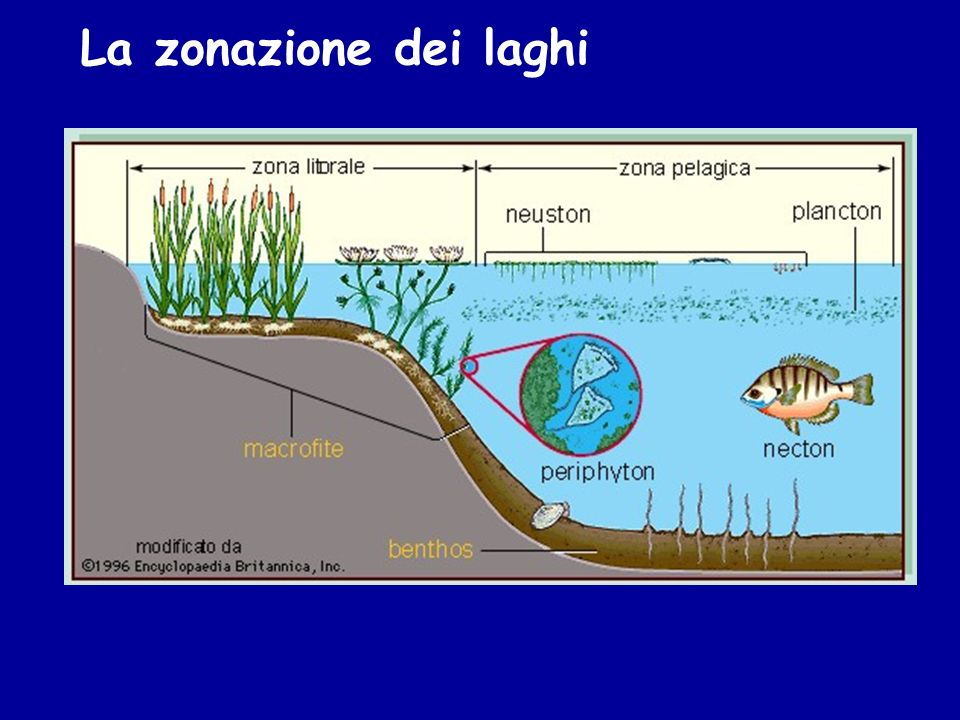 La zonazione dei laghi