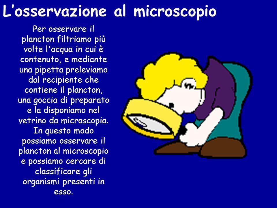 L'osservazione al microscopio