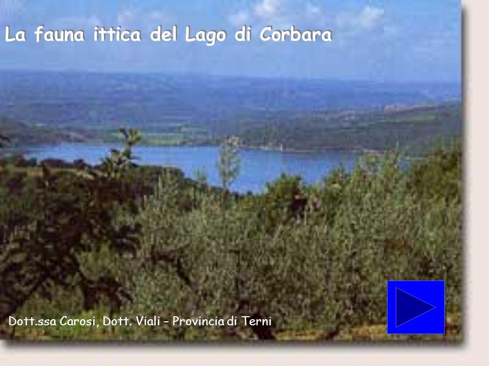 La fauna ittica del Lago di Corbara