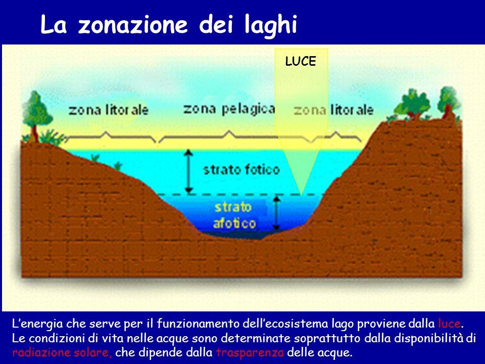La zonazione dei laghi LUCE