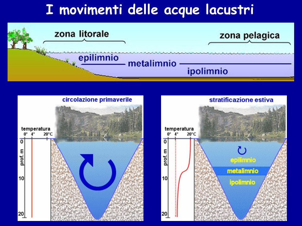 I movimenti delle acque lacustri