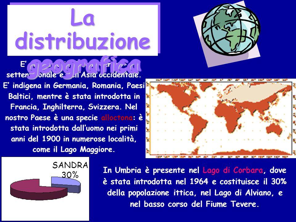 La distribuzione geografica
