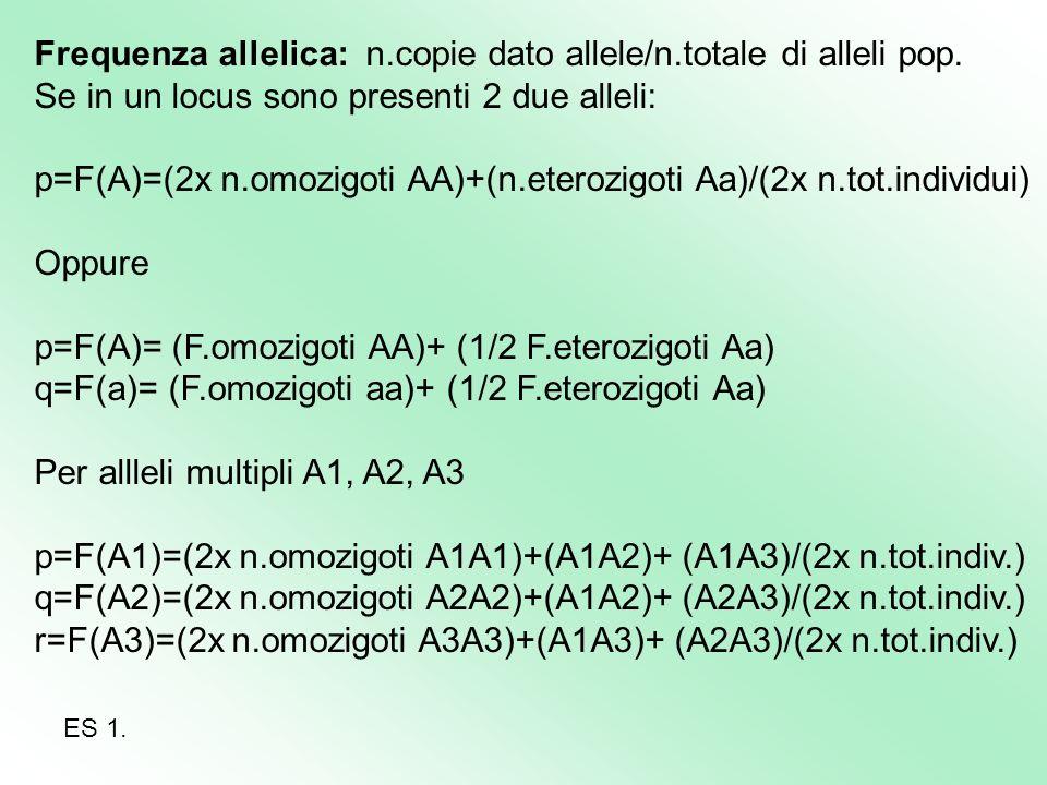 Frequenza allelica: n.copie dato allele/n.totale di alleli pop.