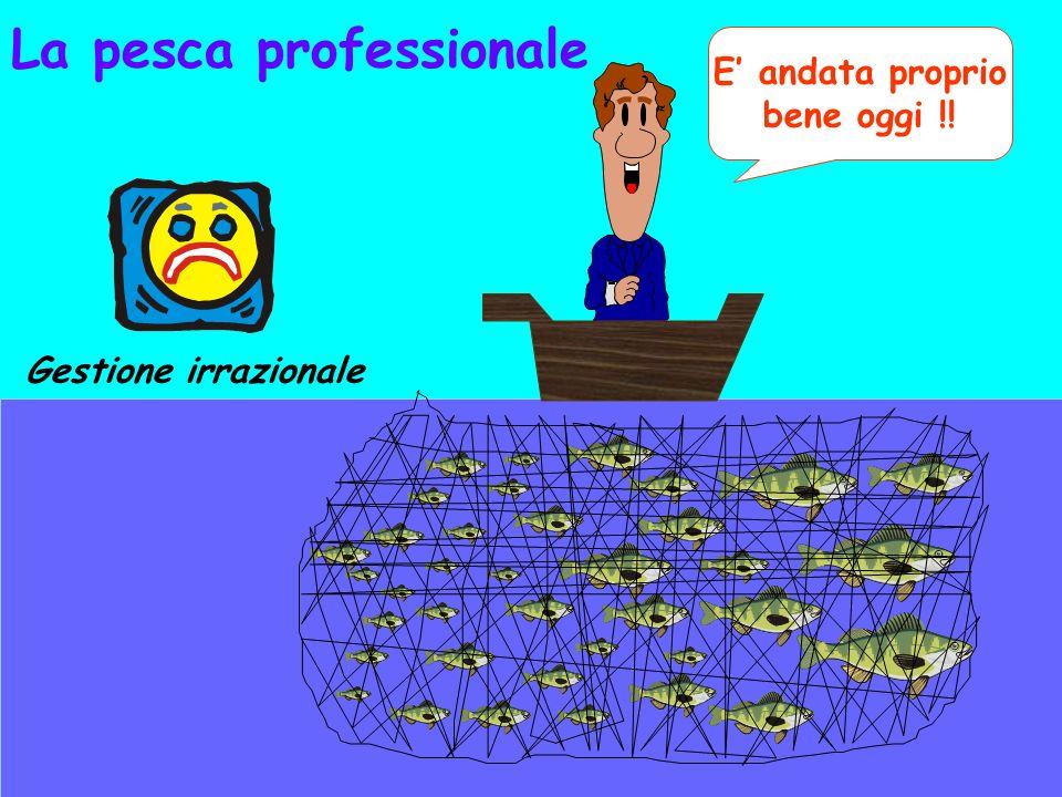 La pesca professionale