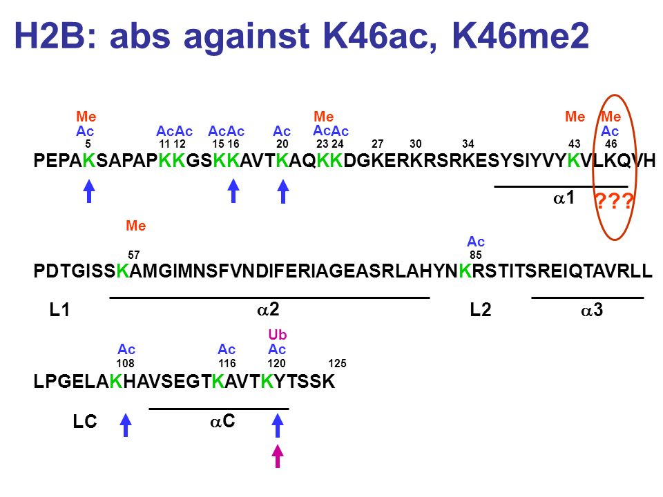 H2B: abs against K46ac, K46me2