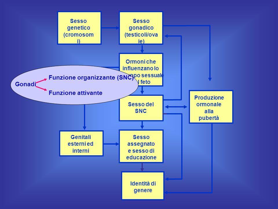 Funzione organizzante (SNC)