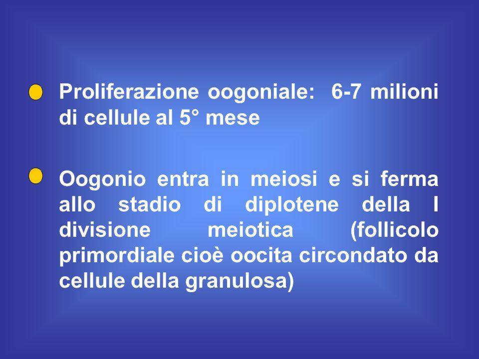 Proliferazione oogoniale: 6-7 milioni di cellule al 5° mese