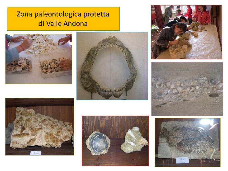 Zona paleontologica protetta di Valle Andona