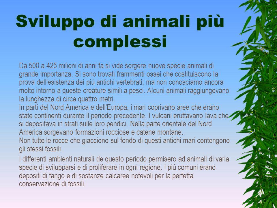 Sviluppo di animali più complessi