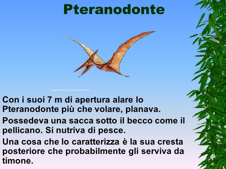 Pteranodonte Con i suoi 7 m di apertura alare lo Pteranodonte più che volare, planava.