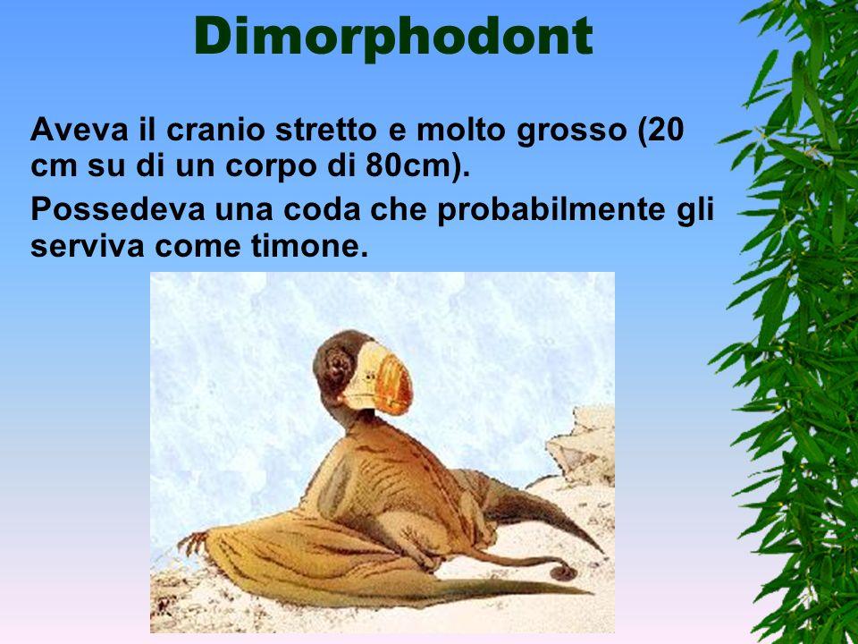 DimorphodontAveva il cranio stretto e molto grosso (20 cm su di un corpo di 80cm).