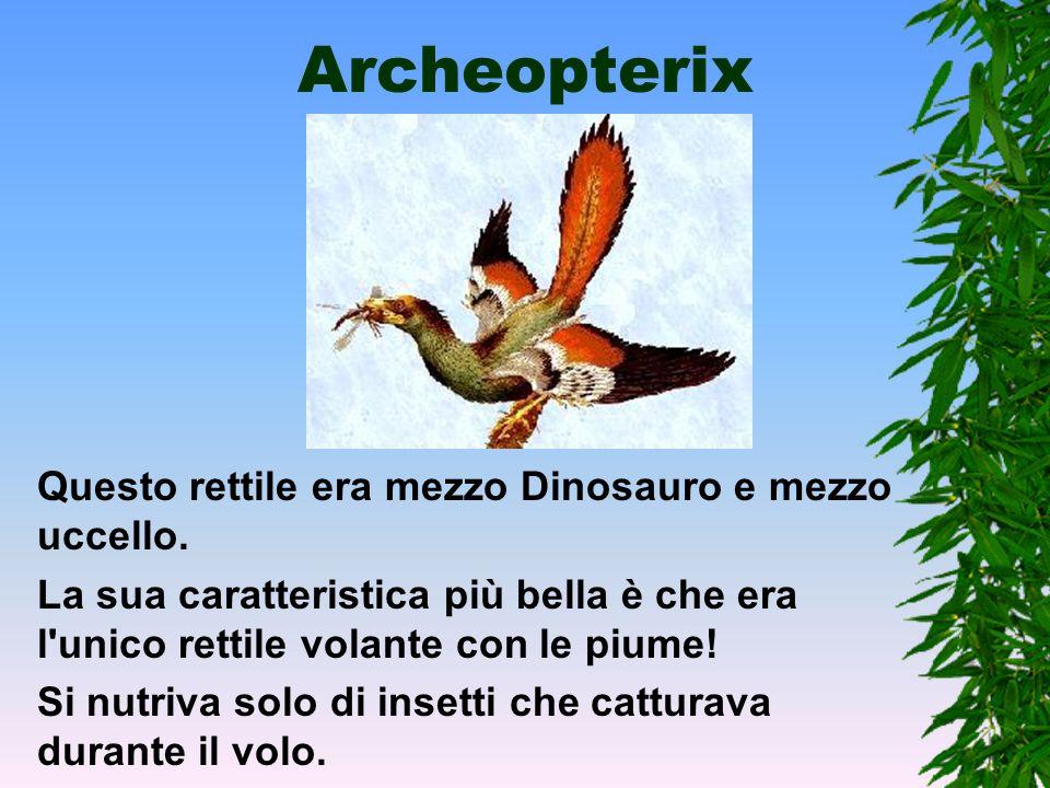 Archeopterix Questo rettile era mezzo Dinosauro e mezzo uccello.