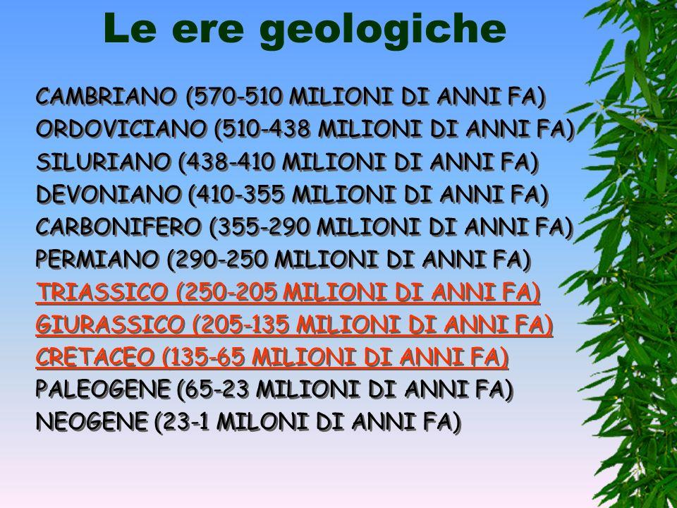 Le ere geologiche CAMBRIANO (570-510 MILIONI DI ANNI FA)
