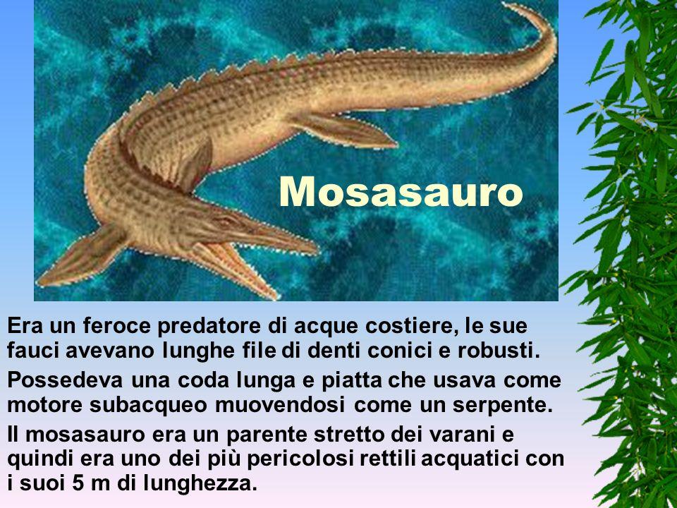 MosasauroEra un feroce predatore di acque costiere, le sue fauci avevano lunghe file di denti conici e robusti.