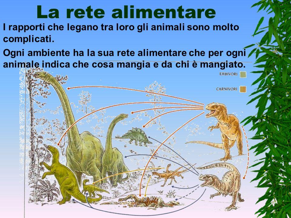 La rete alimentareI rapporti che legano tra loro gli animali sono molto complicati.