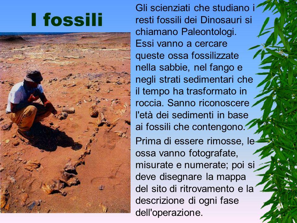 Gli scienziati che studiano i resti fossili dei Dinosauri si chiamano Paleontologi. Essi vanno a cercare queste ossa fossilizzate nella sabbie, nel fango e negli strati sedimentari che il tempo ha trasformato in roccia. Sanno riconoscere l età dei sedimenti in base ai fossili che contengono.