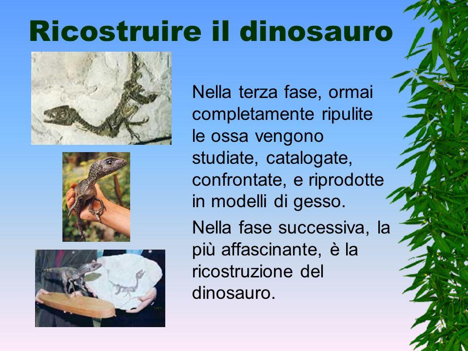 Ricostruire il dinosauro