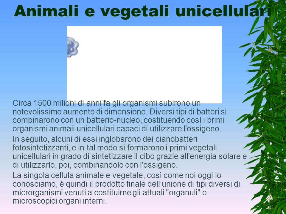 Animali e vegetali unicellulari