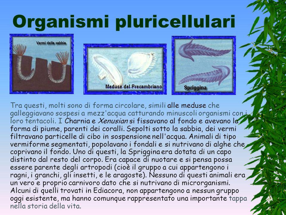 Organismi pluricellulari