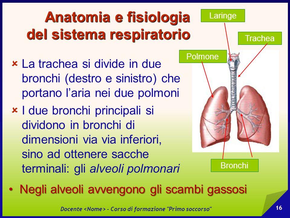 Anatomia e fisiologia del sistema respiratorio