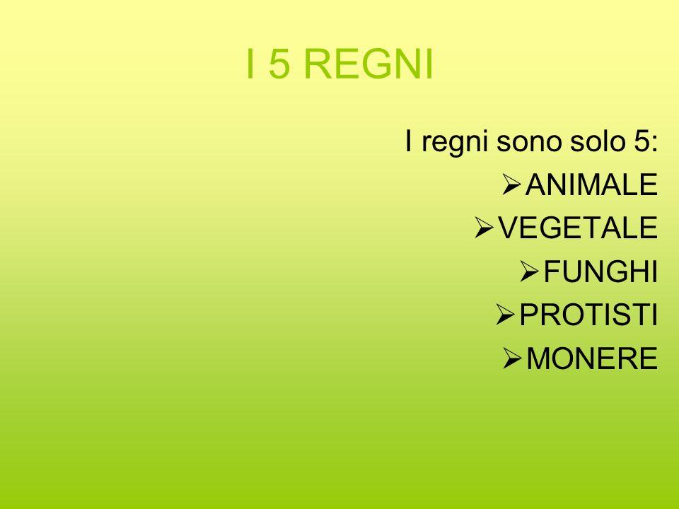 I 5 REGNI I regni sono solo 5: ANIMALE VEGETALE FUNGHI PROTISTI MONERE