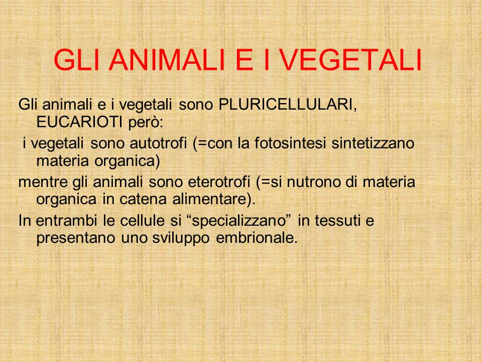GLI ANIMALI E I VEGETALI