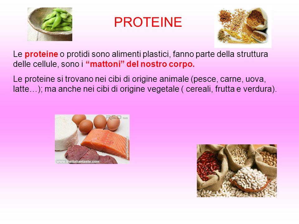 PROTEINE Le proteine o protidi sono alimenti plastici, fanno parte della struttura delle cellule, sono i mattoni del nostro corpo.