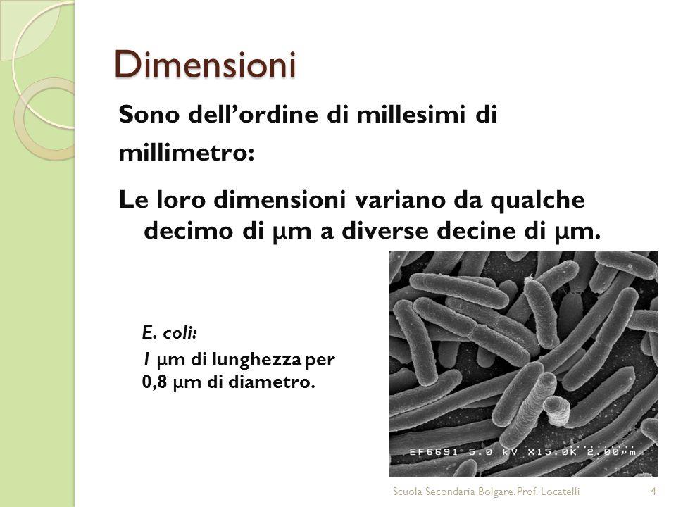 Dimensioni Sono dell'ordine di millesimi di millimetro: