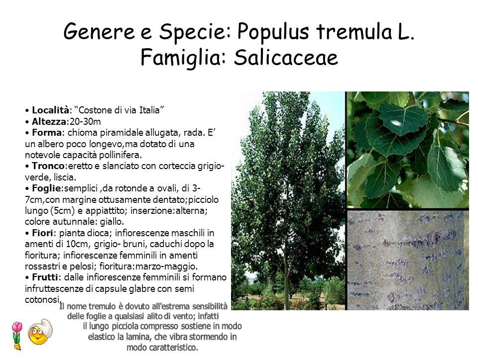 Genere e Specie: Populus tremula L. Famiglia: Salicaceae
