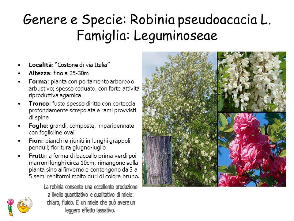 Genere e Specie: Robinia pseudoacacia L. Famiglia: Leguminoseae