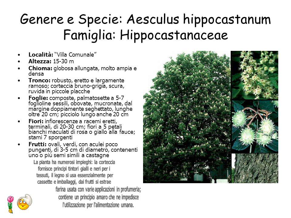 Genere e Specie: Aesculus hippocastanum Famiglia: Hippocastanaceae