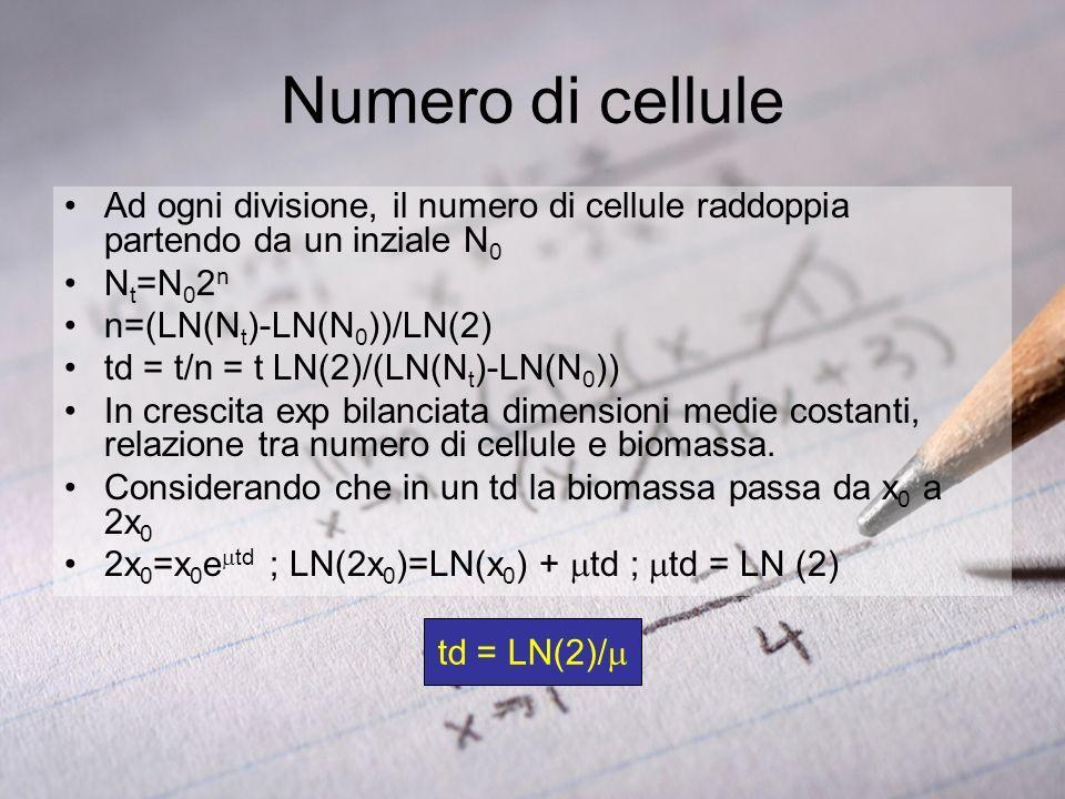 Numero di cellule Ad ogni divisione, il numero di cellule raddoppia partendo da un inziale N0. Nt=N02n.