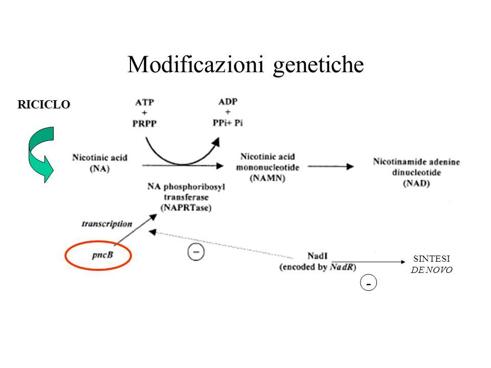 Modificazioni genetiche